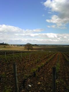 初めてのブドウ畑
